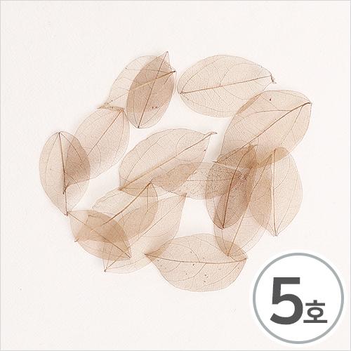 드라이나뭇잎*5호*연밤*(20개입) B-05-02